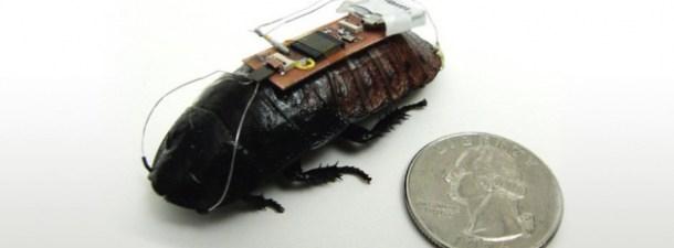 Ejemplo de cucaracha cyborg